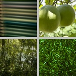 Green photographs
