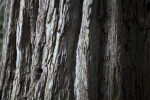 Greyish Hues - Tree Bark