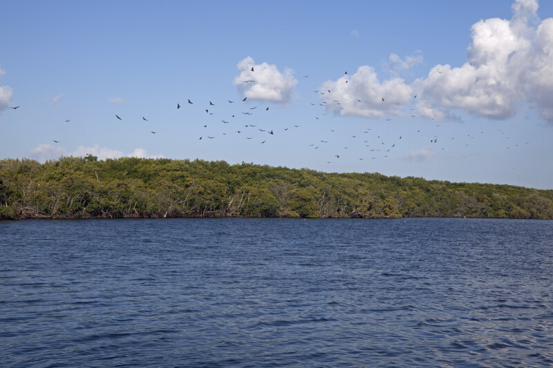Group of Birds Flying off in the Distance