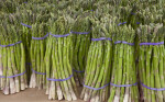 Group of Bundled Asparagus