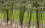 Group of Bundled Asparagus