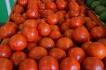 Group of Medium-Sized Vine Ripe Tomatoes