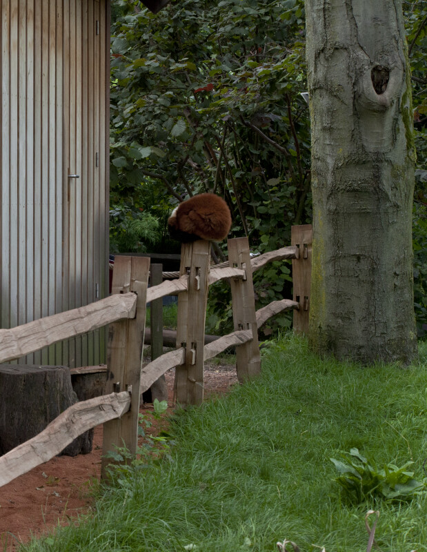 Group of People Looking at Brown, Furry Mammal Resting on Wooden Fence