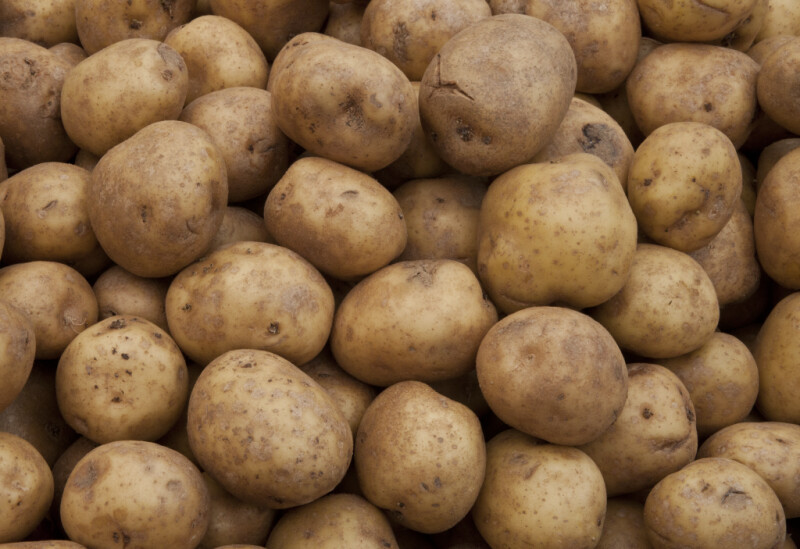 Group of Potatoes on Display at Haymarket Square