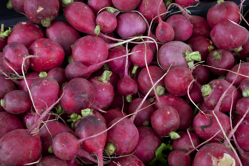 Group of Radishes