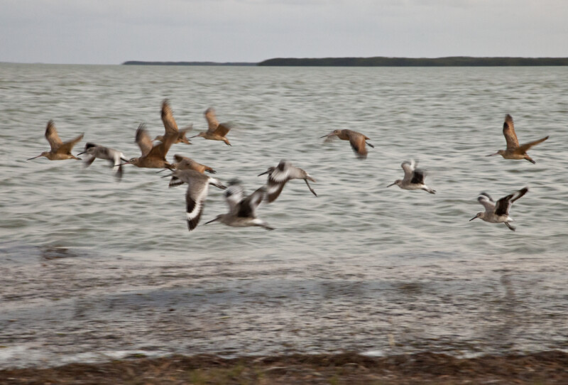 Group of Shorebirds Flying Near the Shore at the Florida Campgrounds of Everglades National Park