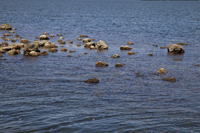 Group of Small and Medium-Sized Rocks at Biscayne National Park
