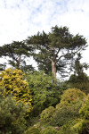 Group of Trees and Shrubs