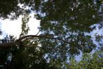 Gumbo Limbo Branch