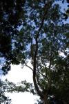 Gumbo Limbo Canopy