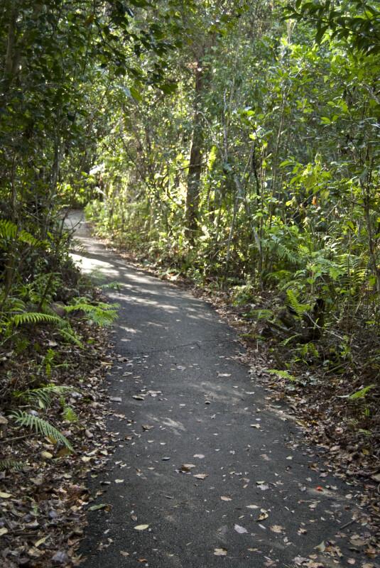 Gumbo Limbo Path