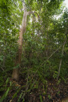 Gumbo Limbo Trail at Everglades National Park