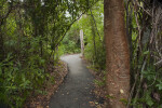 Gumbo Limbo Trail with Arching Trees and Gumbo-Limbo Tree