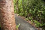 Gumbo-Limbo Tree Trunk along Gumbo Limbo Trail