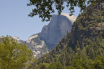 Half Dome Seen through the Trees