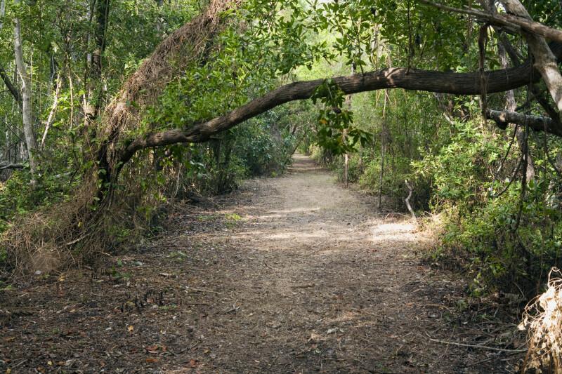 Half-Fallen Tree