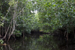 Halfway Creek in Everglades National Park