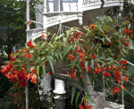 Hanging Flowers and Staircases