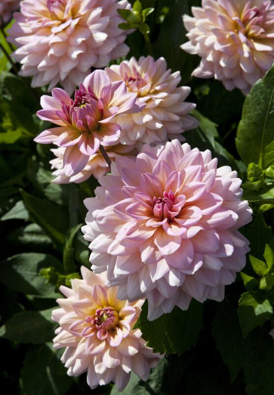 """Harzfee"" Flowers"