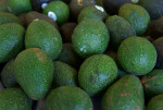 Hass Avocados at the Tampa Bay Farmers Market