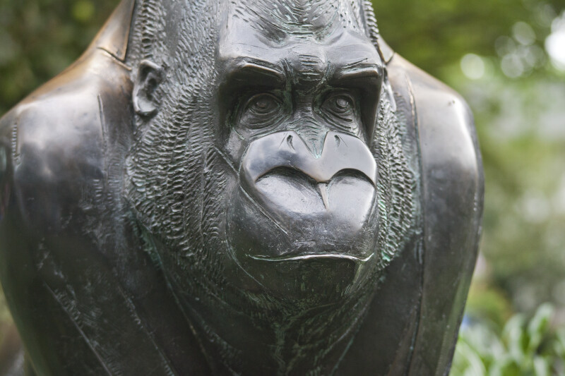 Head of a Bronze Gorilla at the Artis Royal Zoo