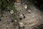 Herbaceous Plant Flowers