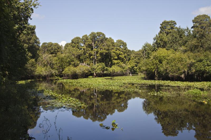 Hillsborough River at Mid-Morning