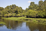 Hillsborough River at Nature's Classroom