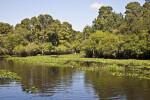 Hillsborough River at Nature's Classroom
