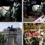Horses photographs