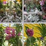 Houseplants photographs