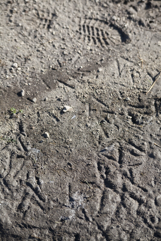 Collection of Bird Tracks