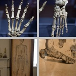 Human Anatomy photographs
