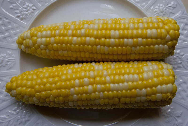 Husked Corn on White Plate
