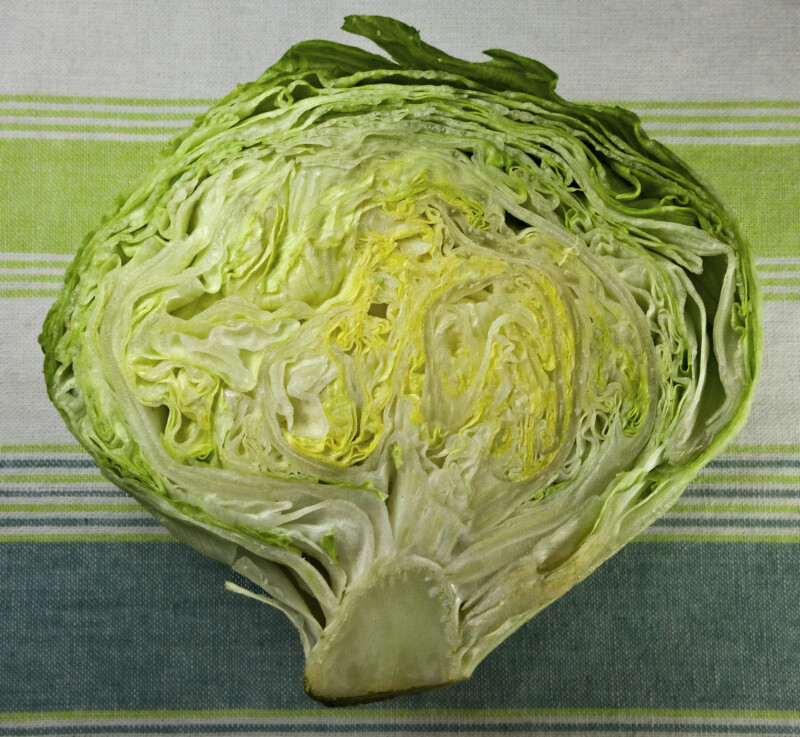 Iceberg Lettuce Cross section