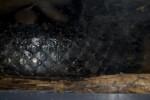 Indigo Snake Scales