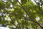 Inkwood Branches
