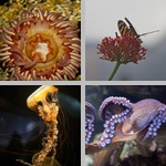 Invertebrates photographs