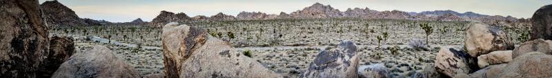 Joshua Tree Preserve Panorama