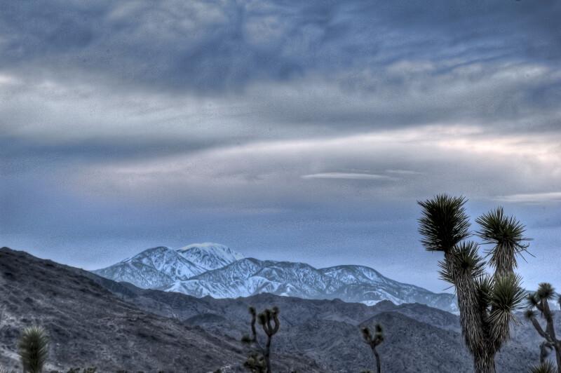 Joshua Tree Preserve with Mountains
