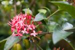 Jungle Flame Flowers