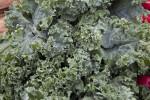 Kale Leaves Close-Up