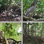 Kampong Gardens photographs