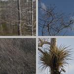Kirby Storter Roadside Park photographs