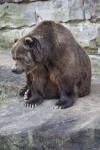 Kodiak Sitting