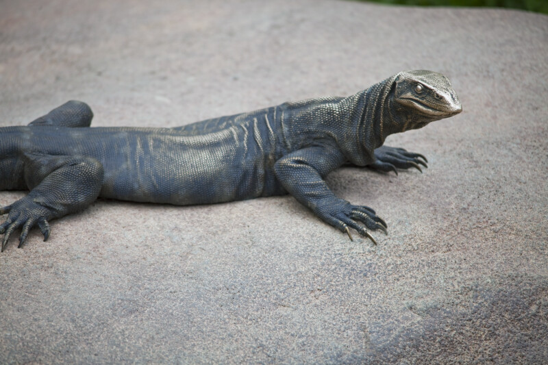 Komodo Dragon Bronze