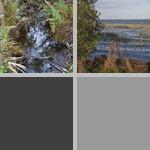 Lake June-in-Winter Scrub State Park photographs