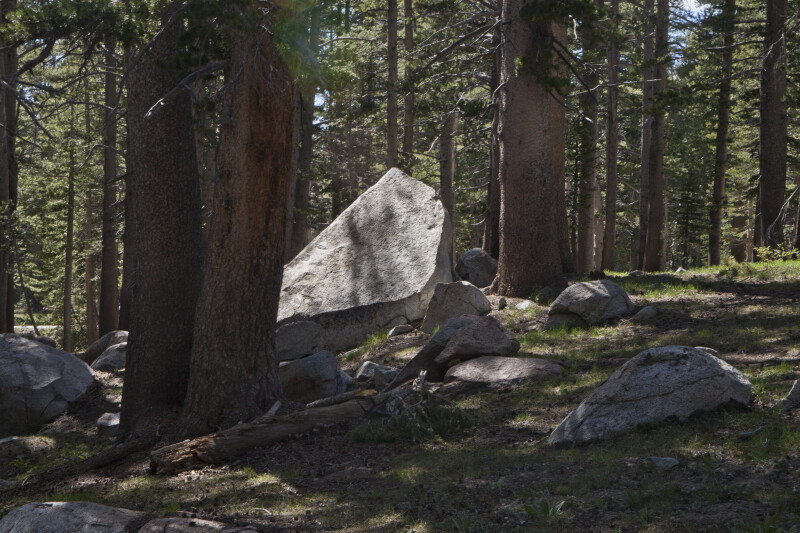 Large Boulders in the Woods