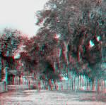 Large Oaks on Spring Street