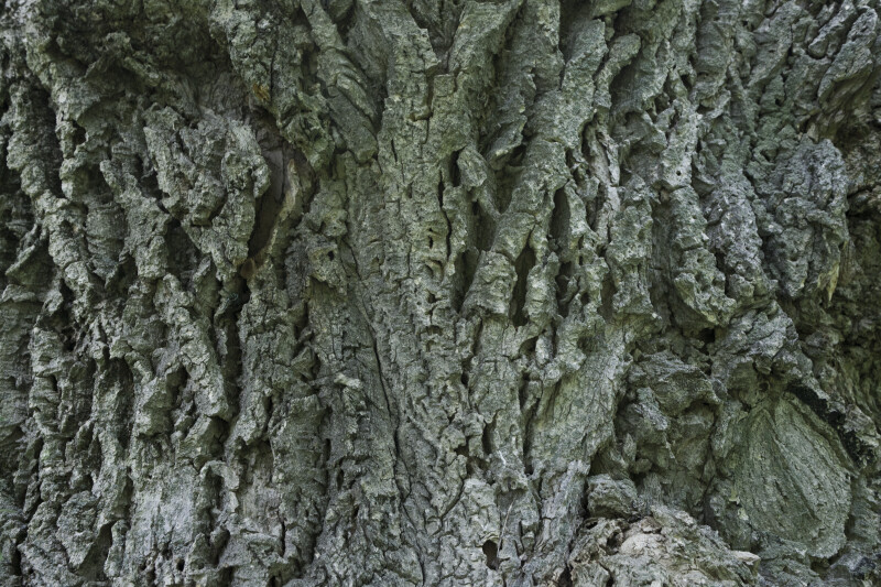 Lavalle Cork Bark Detail